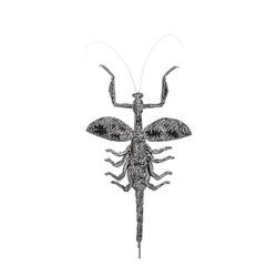 Acromantis Cyaneus