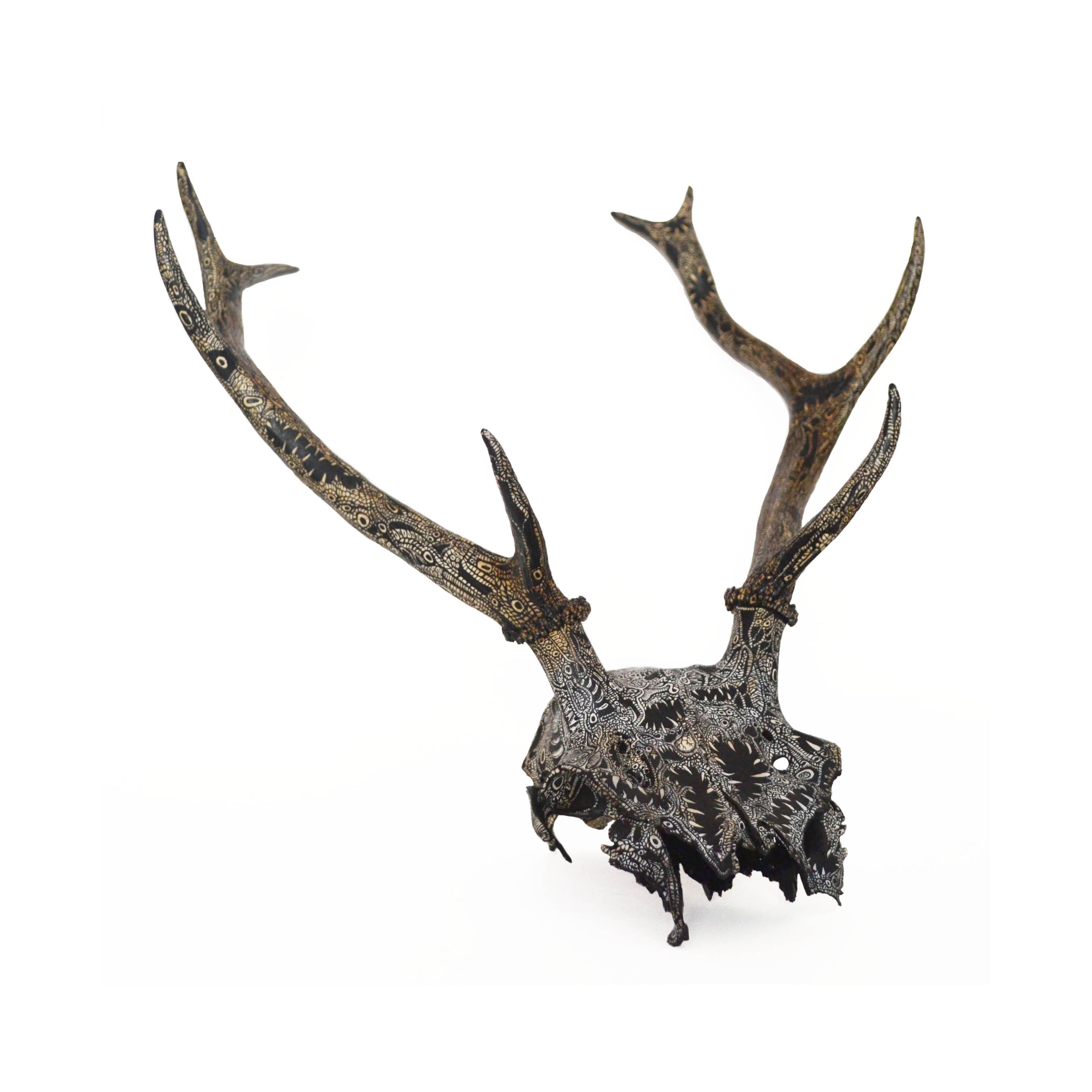 Cervus Elaphus (European Deer)