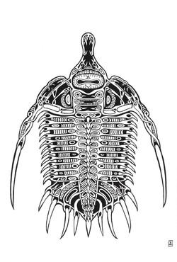 Psychopyge Elegans - Trilobita III