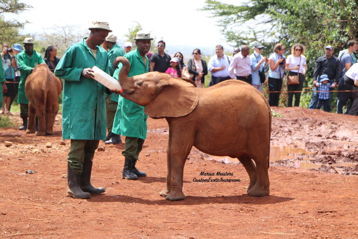 Visiting the Sheldrick Wildlife Trust in Kenya