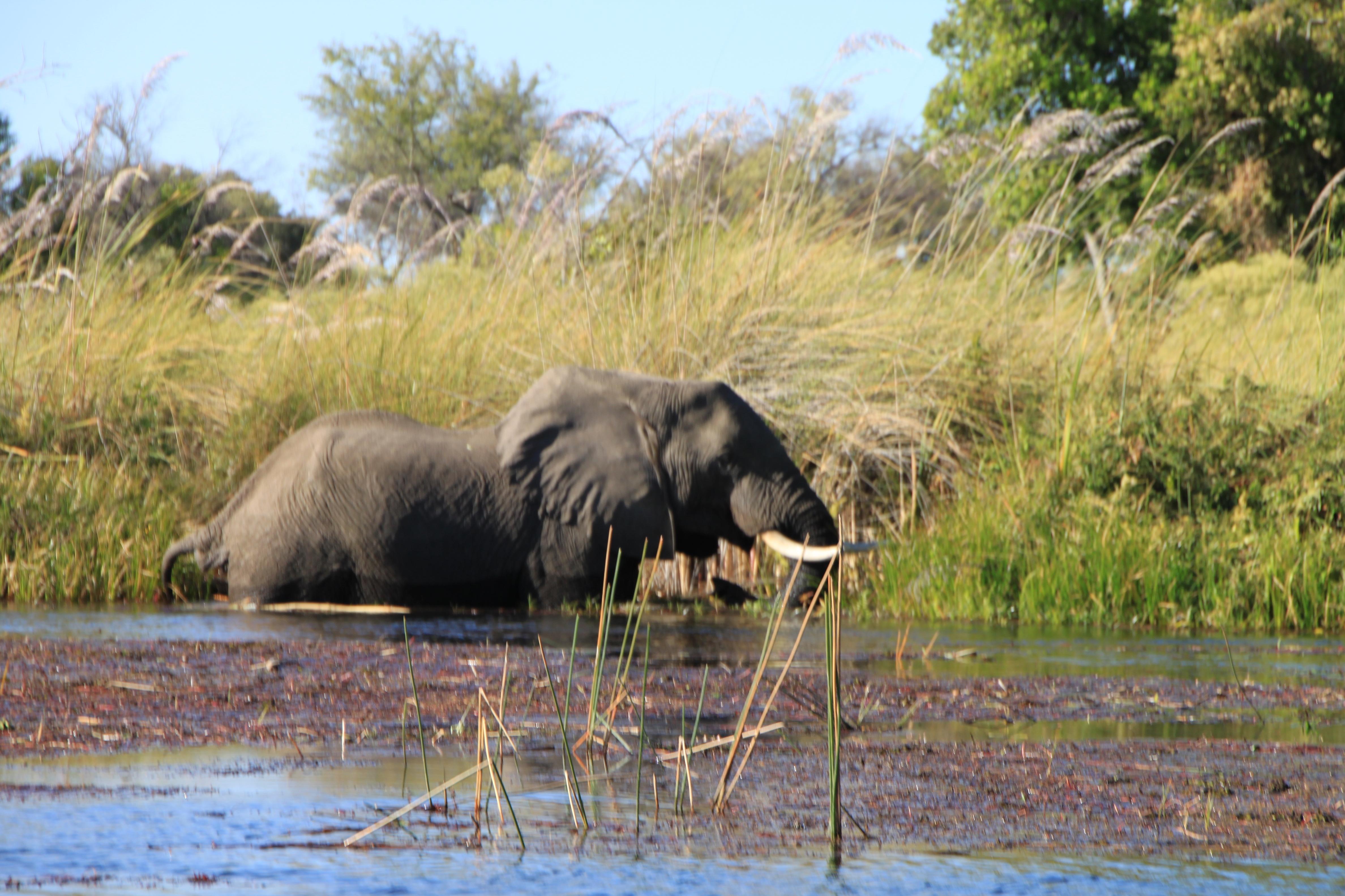 Botswana and Zambia