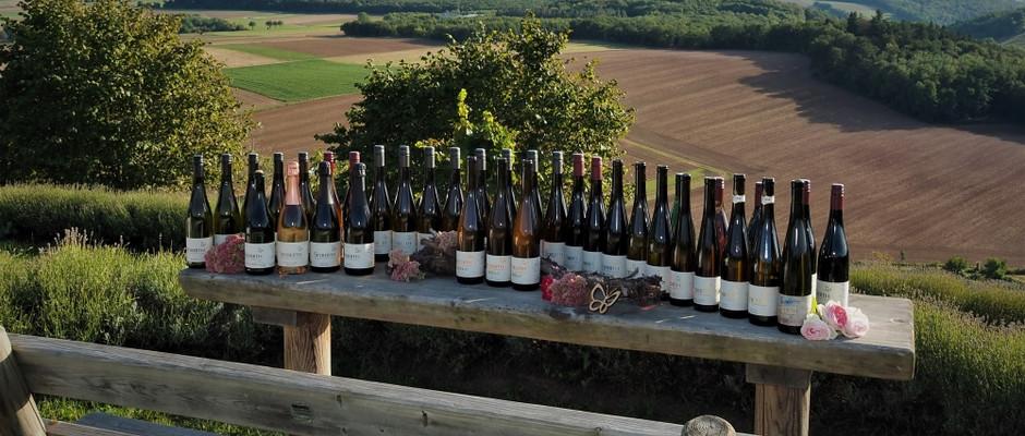 """die """"Weinfamilie"""" in der Heerkretz"""