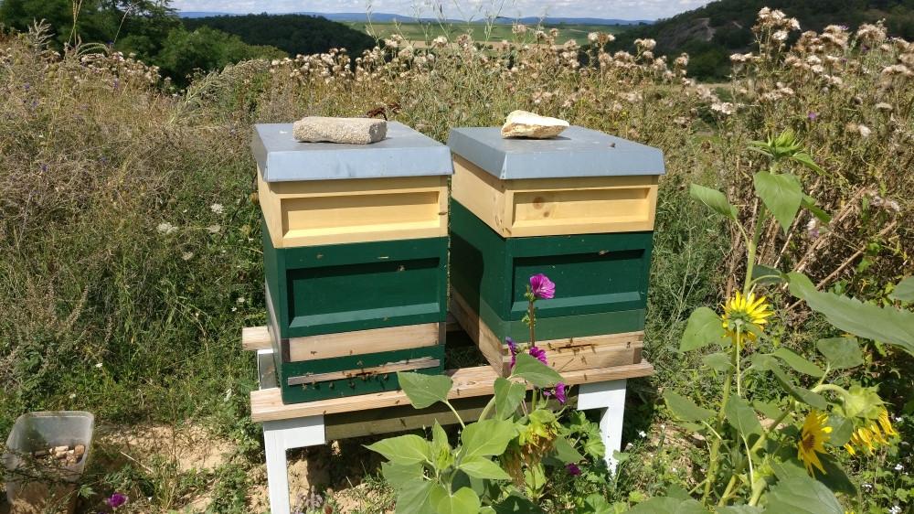 Unsere fleissigen Bienen im Weinberg