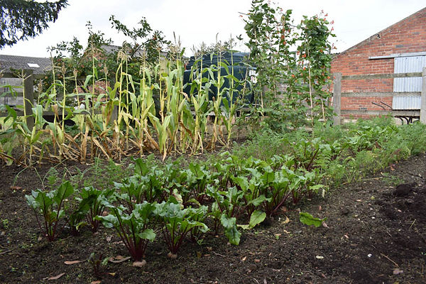 Amy pic 2 veg plot.jpg