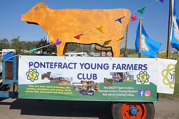 Young farmers trailer cow.jpg