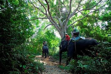 Phuket tours