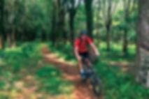 cycling-Phuket-rubber-plantation.jpg