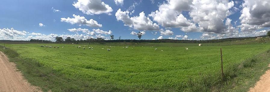 Pasture Sheep.jpg