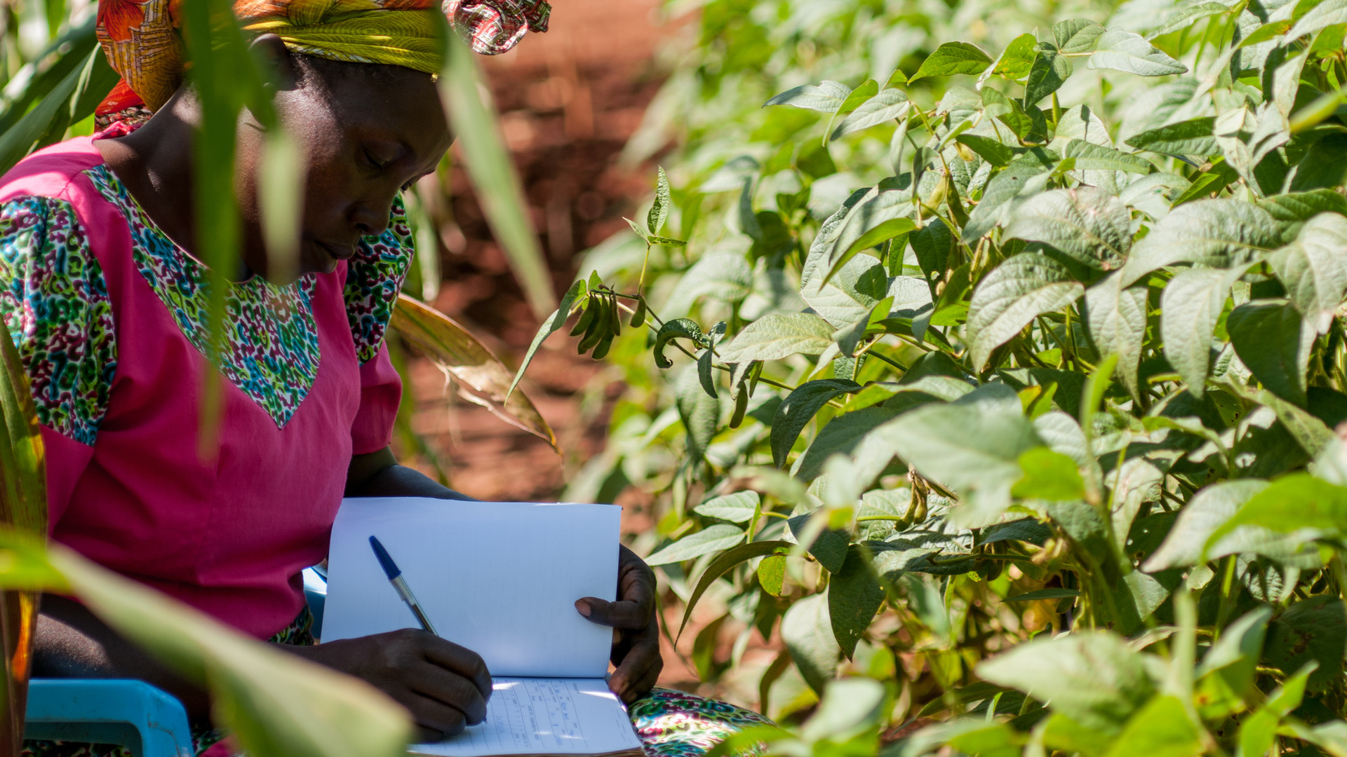 Smallholder Women Intensification