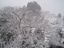 冬 100311 (2).jpg