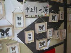 水上の蝶 150916 (7).jpg