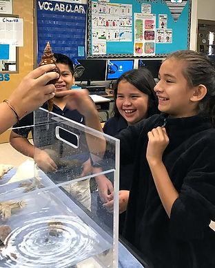 Children's Programs at Bailey-Matthews National Shell Museum on Sanibel Island Florida