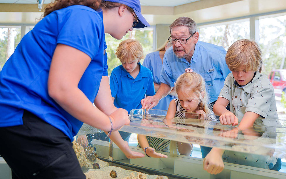 Fun kids activities at the National Shell Museum include touch pools, where families can touch live mollusks!
