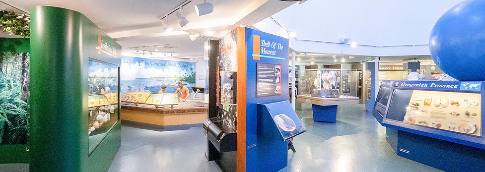 Exhibits at Bailey-Matthews National Shell Museum on Sanibel Island