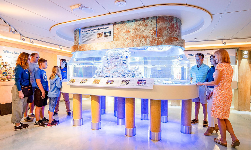 Visitors enjoy the Living Gallery at Bailey-Matthews National Shell Museum