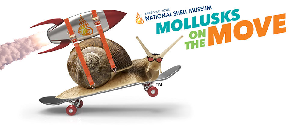 Mollusks on the Move by Bailey-Matthews National Shell Museum