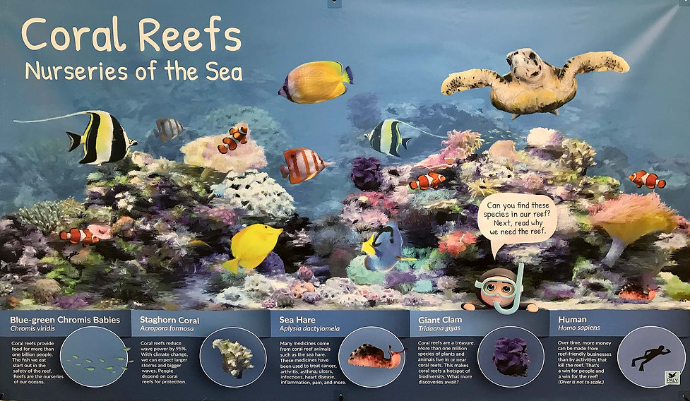 Coral Reefs: Nurseries of the Sea exhibit at Bailey-Matthews National Shell Museum on Sanibel Island