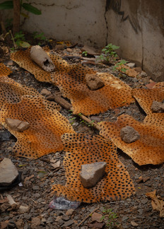 Cheetah skins left to dry in a corner of the market. Skins of crocodiles, snakes, lions, cheetas and other animals are macerated in liquor in order to get a potion to drink to gain protections against black magic.