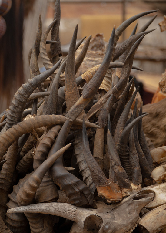 A composition of buffallo and other big mammals' horns on a market stall. Horns are used during celebrations in order to produce sounds, blowing into them.