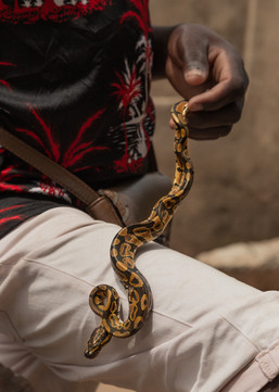 Thiery Alimatin plays with a young python. Snakes are used generally to protect newborns. Teeth of vipers, once pulverized, are injected in the body in order to get protection from snake bites.
