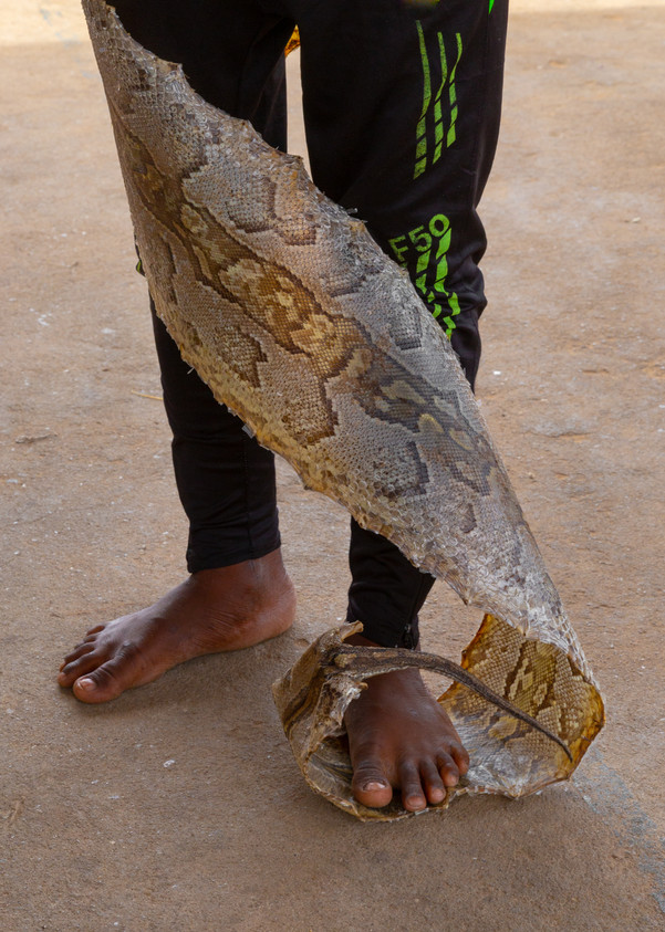 A young man with the skin of a large snake. Skins of crocodiles, snakes, lions, leopards and other animals are macerated in liquor in order to get a potion to drink to gain protections against black magic.