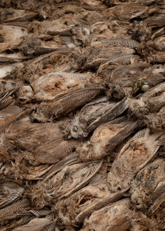 Dried owls. Cats and owls, once pulverized and mixed with blood, are used to make vaccinations against witchcraft.