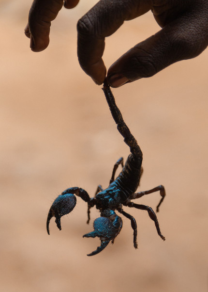 A kid plays with a scorpion.