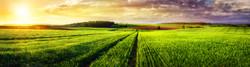 Rural Landscape Sunset Panorama