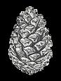 hand-drawn-pine-cone-vector-id922657848_