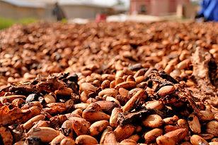 cocoa-beans-2926207_1920.jpeg