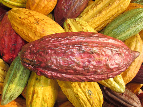 Cacao (7).jpeg