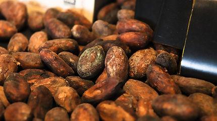 cacaobean-4000301_1920.jpeg