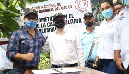 Comprometidos con la renovación de cultivos de cacao en la capital cacaotera de Colombia