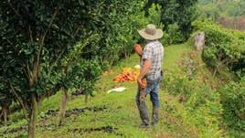 En tiempos de pandemia, producción de cacao alcanzó cifra récord