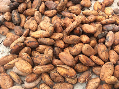 cocoa-1580724_1920.jpeg