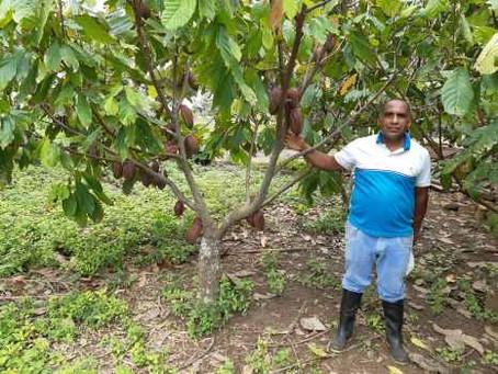 Cacao de Córdoba fue seleccionado como uno de los 50 mejores del mundo