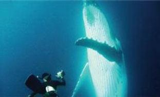 thumb-life-amung-whales.jpg