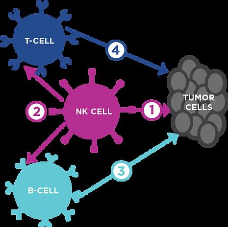 ImmuneSystem.png