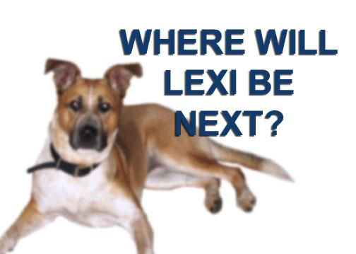 Lexi where next.jpg