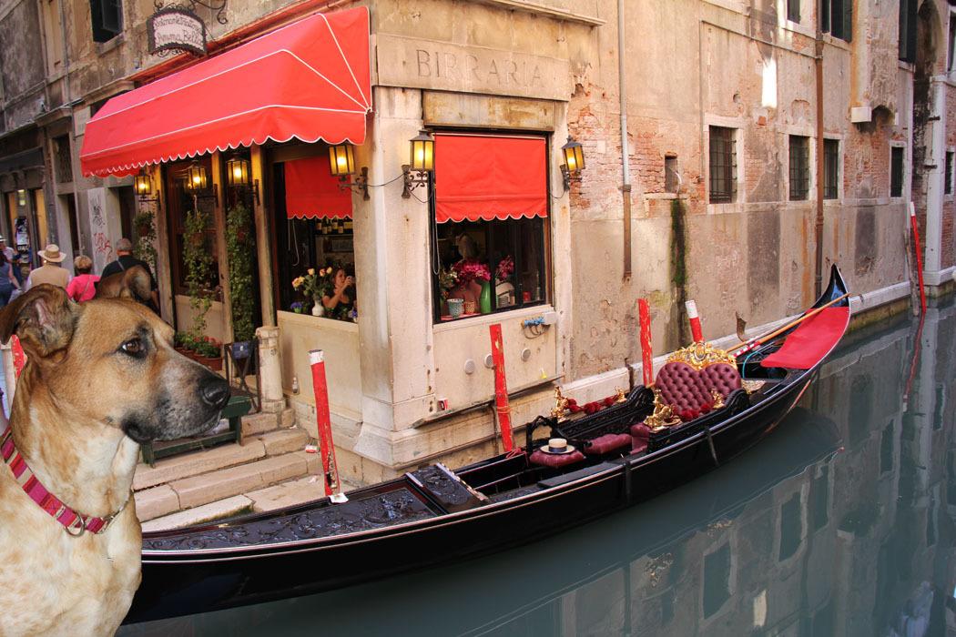 Lexi in Venice.jpg