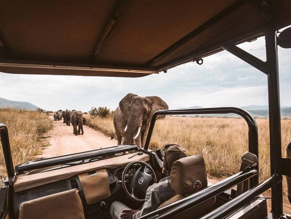 SAfrica.jpg