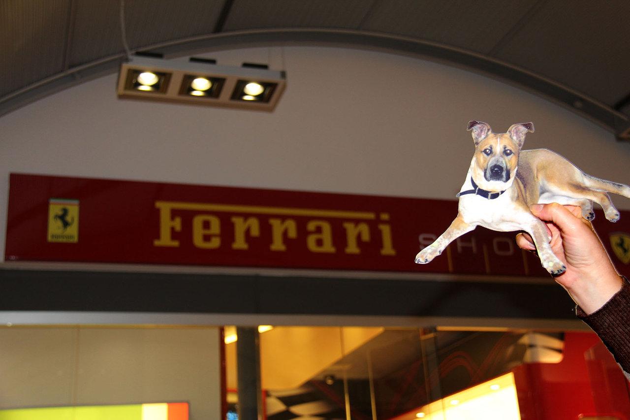 Ferrari Lexi.jpg