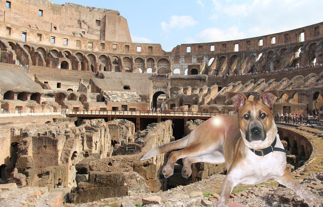 Lexi at Coliseum