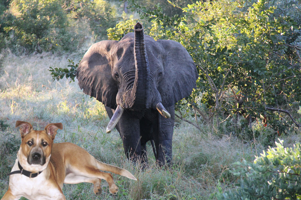 Lexi elephant.jpg