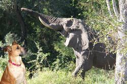 Lexi elephant 2 copy.jpg