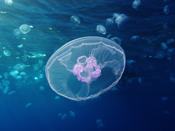 #20 Should I Pee on a Jellyfish Sting?