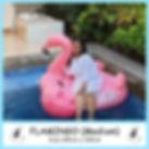 Medium Flamingo.jpg