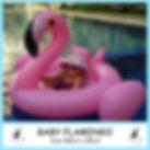 Small Baby Flamingo.jpg