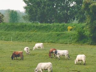 Lucha histórica: las vacas son ajenas, y, ahora, fuera del alcance de la población