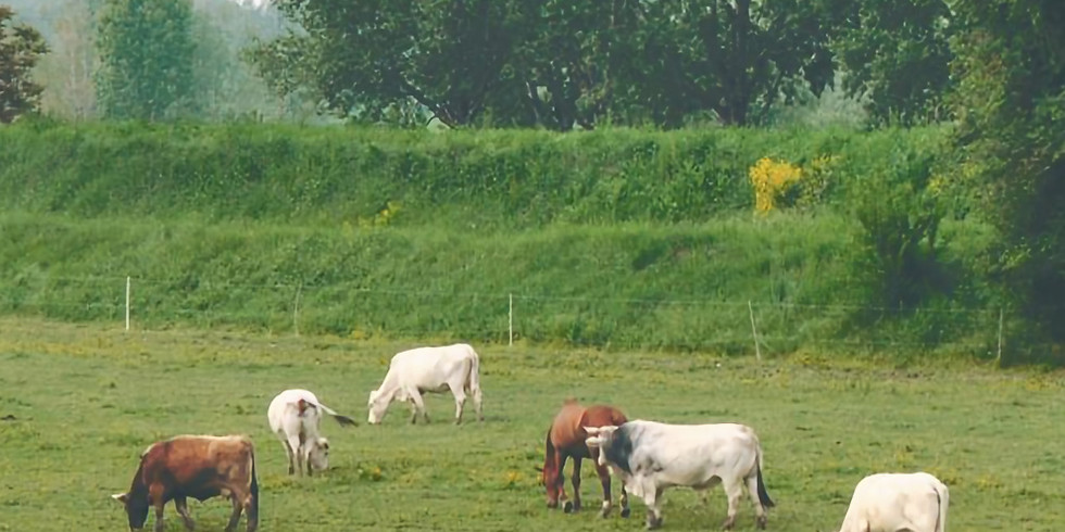 Open Barn Days